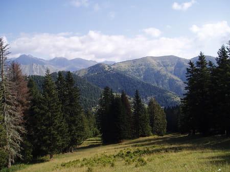 Forêt de Turini