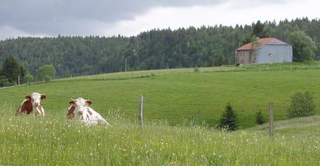 Haut-Jura