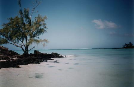 L'île aux Cerfs