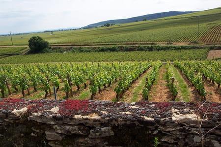 Le vignoble de la côte de Beaune