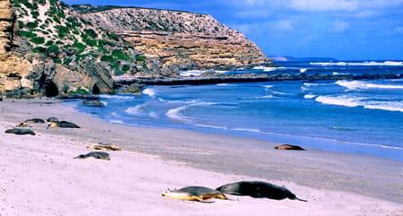 Sud australien