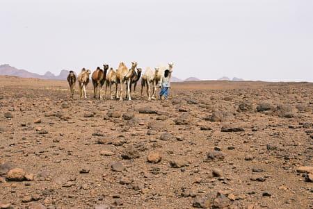 Le Sahara et la vallée d'Assekrem