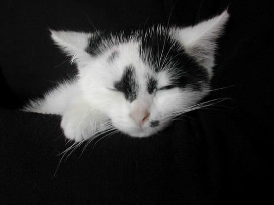 autres-animaux-autres-chats-alencon-france-6389734149-463690