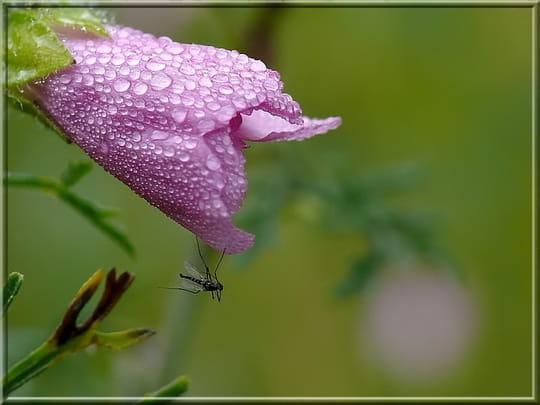 BUSQUEMOS HERMOSAS FLORES - Página 2 Autres-fleurs-charmes-france-1038950557-1145501