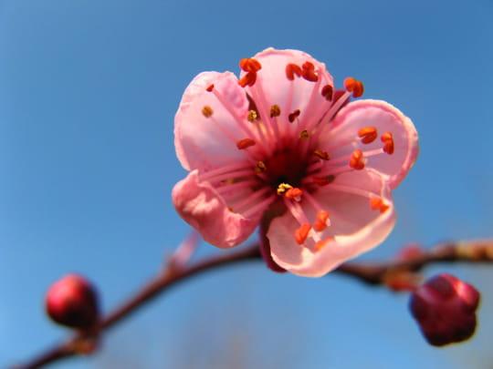 autres-fleurs-vernouillet-france-1068722800-1175281