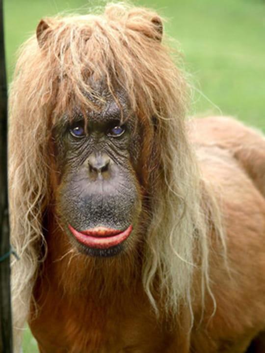 Sondage : Nouvelle couleur du Forum! Autres-singes-autres-chiens-france-1499292255-826633