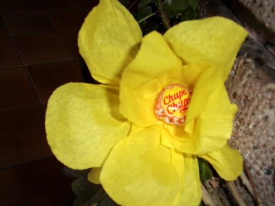 fleurs-insolites-compositions-florales-autres-fleurs-suisse-5750696064-865024
