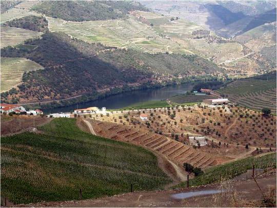 جمهورية البرتغال .. Vignes-porto-portugal-2454187274-866713