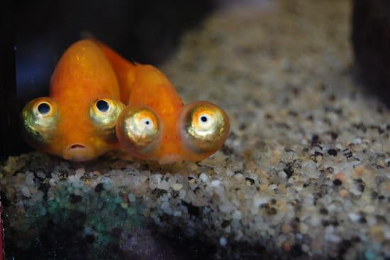 http://image-photos.linternaute.com/image_photo/550/animaux-insolites-aquariums-brugelette-belgique-1169650033-1282707.jpg