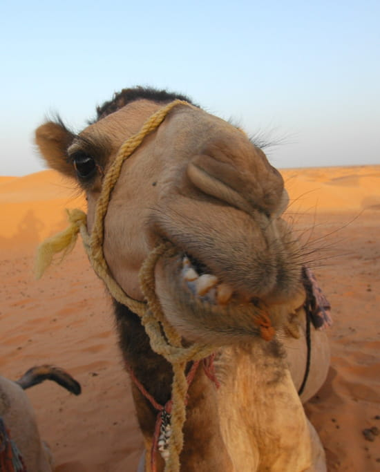 [Jeu] Le Jeu de l'image - Page 2 Autres-actualite-ksar-ghilane-tunisie-7287256122-341209