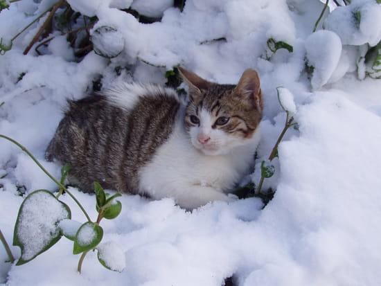Bonjour aux agitées du bocal ! Autres-animaux-autres-chats-algerie-9172021747-962352