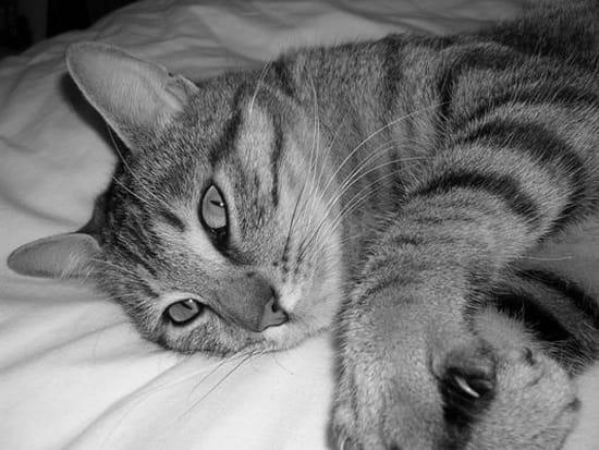 autres-animaux-autres-chats-toulouse-france-5936242939-493139