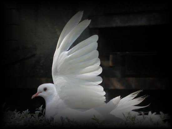autres-animaux-autres-oiseaux-chateau-thierry-france-8216058612-575779