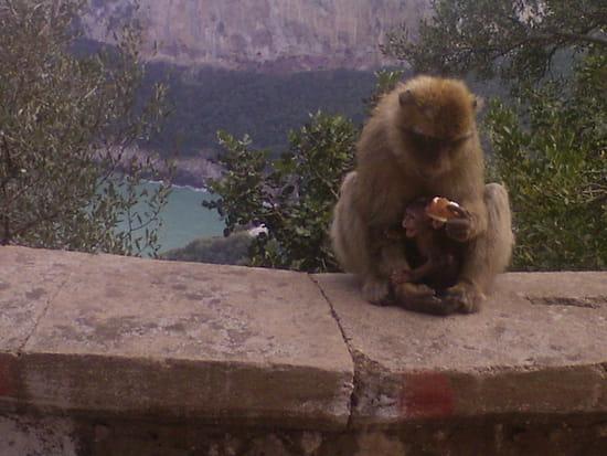 جزائر .... يا لوحة في autres-animaux-bejaia-algerie-1263938811-1392059.jpg