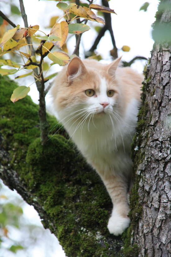 Chat perch�