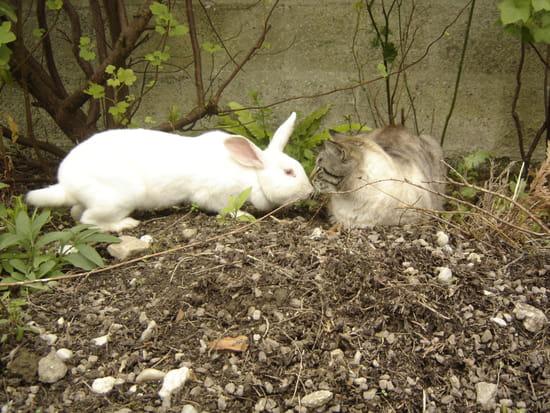 Deux nouveaux amis - Chat et lapin