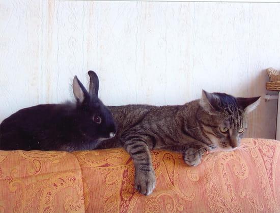 Les  P'tits Amis - Cookie ma lapine, 5 mois, et Papyrus le chat<br>&#10;font bon ménage.