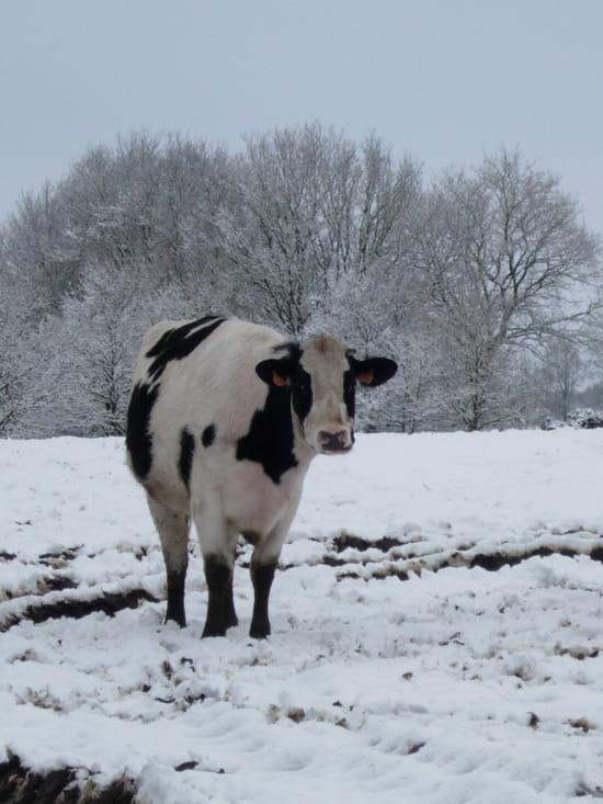 autres-animaux-de-ferme-ploeuc-sur-lie-france-1078343238-1137488