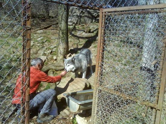 Loup de Gévaudan - Visite au loup du Canada dans la réserve des loups de Gévaudan