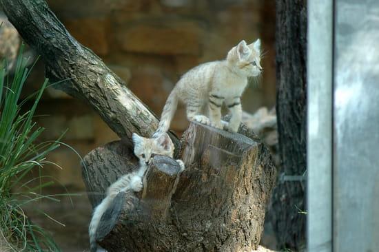 autres-animaux-lyon-france-1270420151-1326387.jpg