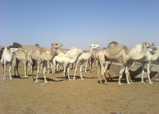 صور من الصحراء الجزائرية * غرداية * تمنراست ...* Autres-animaux-tamanrasset-algerie-1242804410-1216564