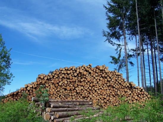 Le bois du Morvan
