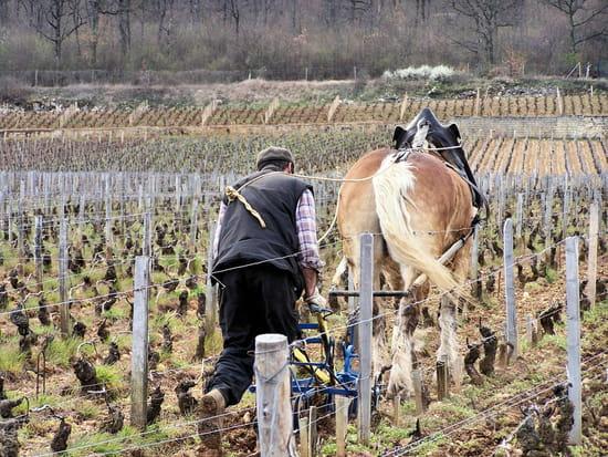 Gevrey Chambertin (21) dans Ma Bourgogne En détails autres-campagne-gevrey-chambertin-france-1248433853-1190388