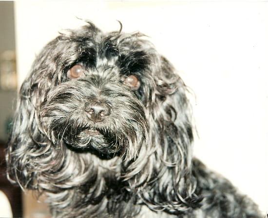 Mon meilleur Ami - Mon petit chien