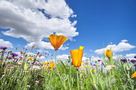 autres-fleurs-saint-bonnet-pres-riom-france-1089029751-1228590