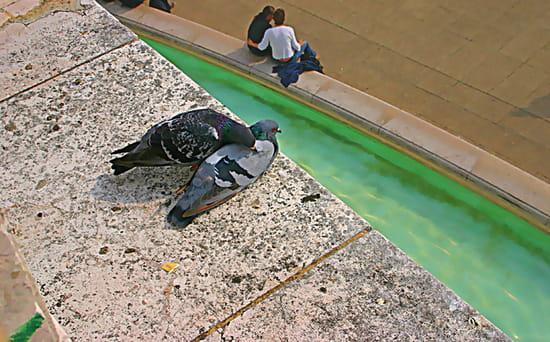 """Deux pigeons s'aimaient d'amour tendre - Photo prise sur une des terrasse de la basilique du Sacré-Coeur à Paris. Le hasard des deux """"couples"""" a bien fait les choses"""