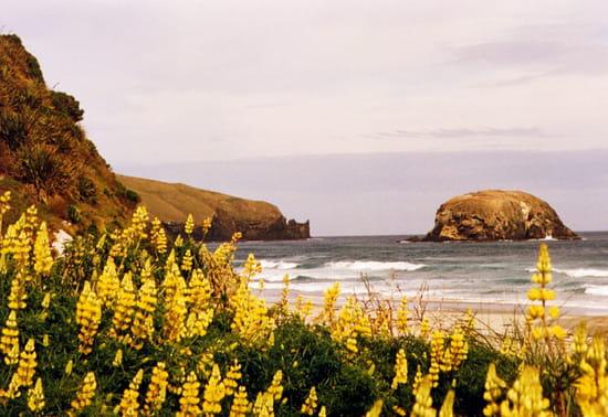 http://image-photos.linternaute.com/image_photo/550/autres-mers-et-plages-dunedin-nouvelle-zelande-6181146503-390063.jpg