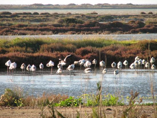!description du lieu! Autres-oiseaux-hyeres-france-7515527607-654814