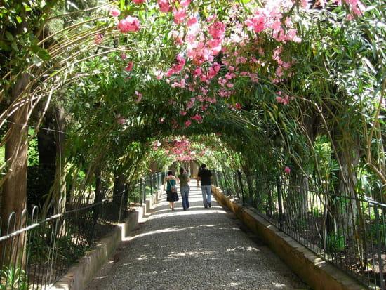 http://image-photos.linternaute.com/image_photo/550/autres-plantes-grimpantes-grenade-espagne-1001820037-1088481.jpg