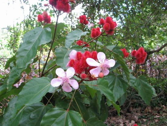 Fleurs exotiques autres-plantes-papeari-polynesie-francaise-1132664807-1204155
