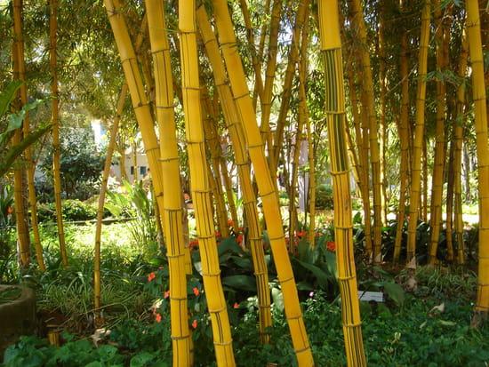 Devinettes janvier 2014 Autres-plantes-rabat-maroc-1190926411-1189576
