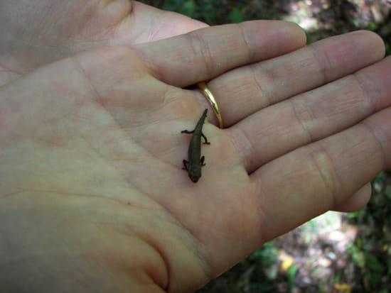 Le plus petit caméléon Autres-reptiles-et-batraciens-madagascar-1269054075-1123687