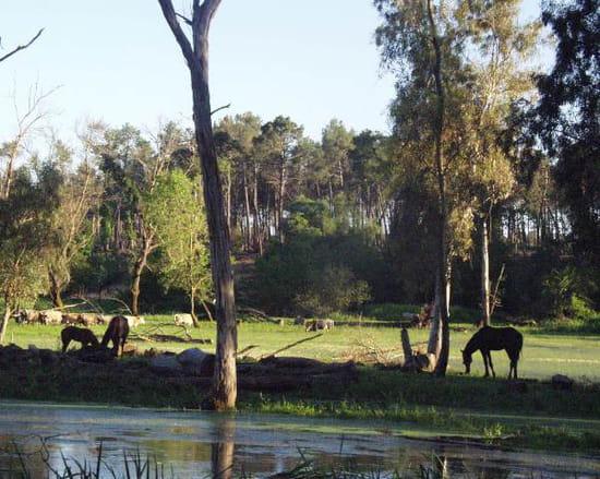 السياحة الجزائرية Chevaux-lacs-autres-chevaux-el-kala-algerie-227014423-887897