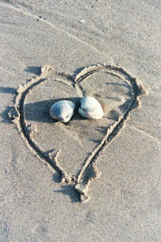 coquillages-plages-autres-mers-et-plages-cherbourg-france-906183124-856006
