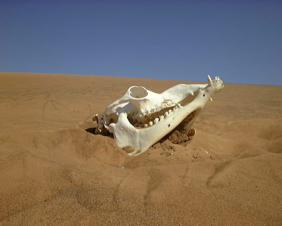 Le problème du chameau (ouvert à tous bien sur ^^ ) - Page 4 Cranes-dunes-dubai-emirats-arabes-unis-6155664325-913954