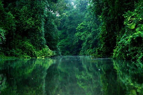 Le paradis vert - Le paradis vert au Costa Rica à Tortuguero