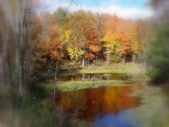 Reflets d'automne - Photo prise au cours d' une promenade en forêt