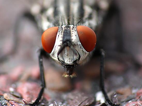 Les yeux dans les yeux - Tête de mouche