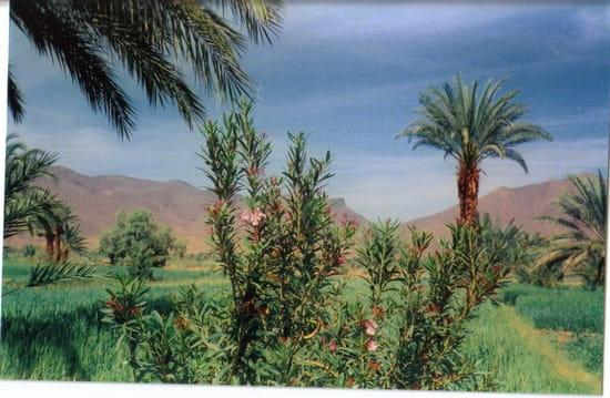 Palmeraie marocaine