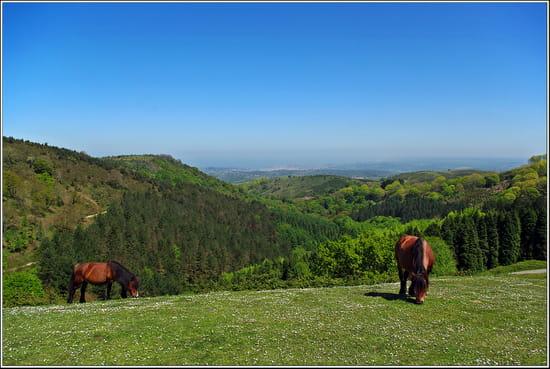 Liberté a perte de vue - Au loin, dans la vallée Saint Jean de Luz, les chevaux en liberté, la montagne et le soleil des Pyrénées, une sensation de nature retrouvée.