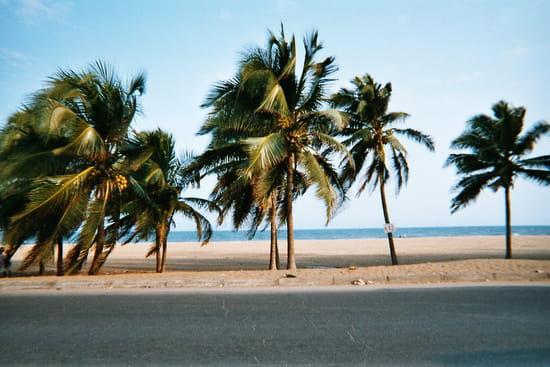 صور من Togo ع.ت.م افريقيا واستراليا Routes-palmiers-plages-lome-togo-8952752948-613371