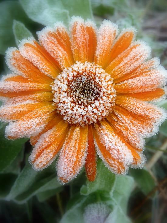 Les fleurs en photo jeux divers page 33 - Fleur commencant par t ...