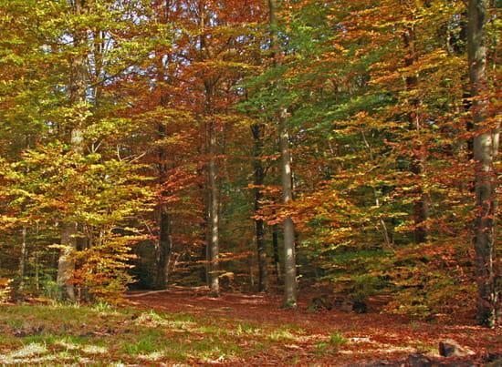 Pensées d'automne Sous-bois-d-automne-1406318340-1129851