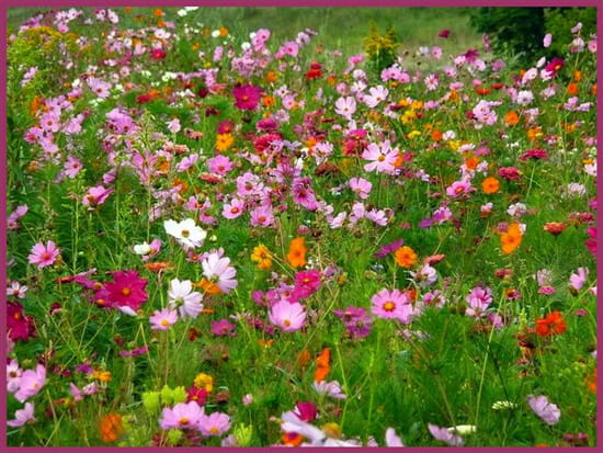 tapis-de-fleurs-1134043563-1333967