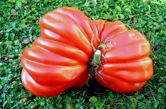 http://image-photos.linternaute.com/image_photo/550/tomates-marignane-france-5489923358-948786.jpg