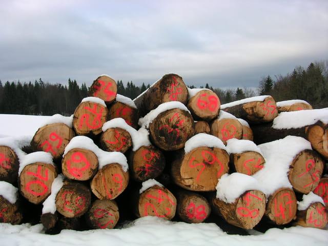1.2.3 nous irons au bois